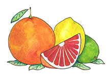 Piping Rock Citrus Delight Fragrance Oil