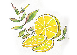Piping Rock Lemon Verbena Fragrance Oil